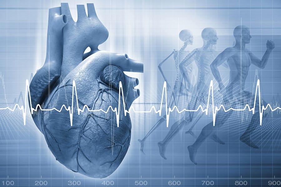 Stress Echocardiography - SCCVS
